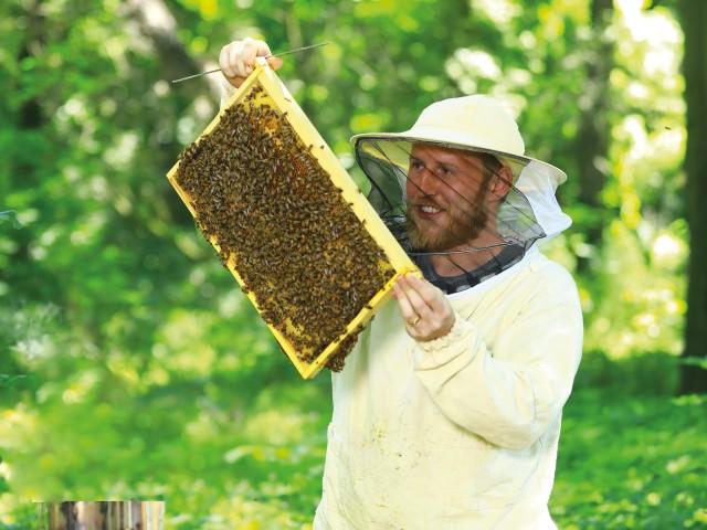 Imker hält einen Rahmen mit Bienewaben in der Hand, © Kathleen Friedrich