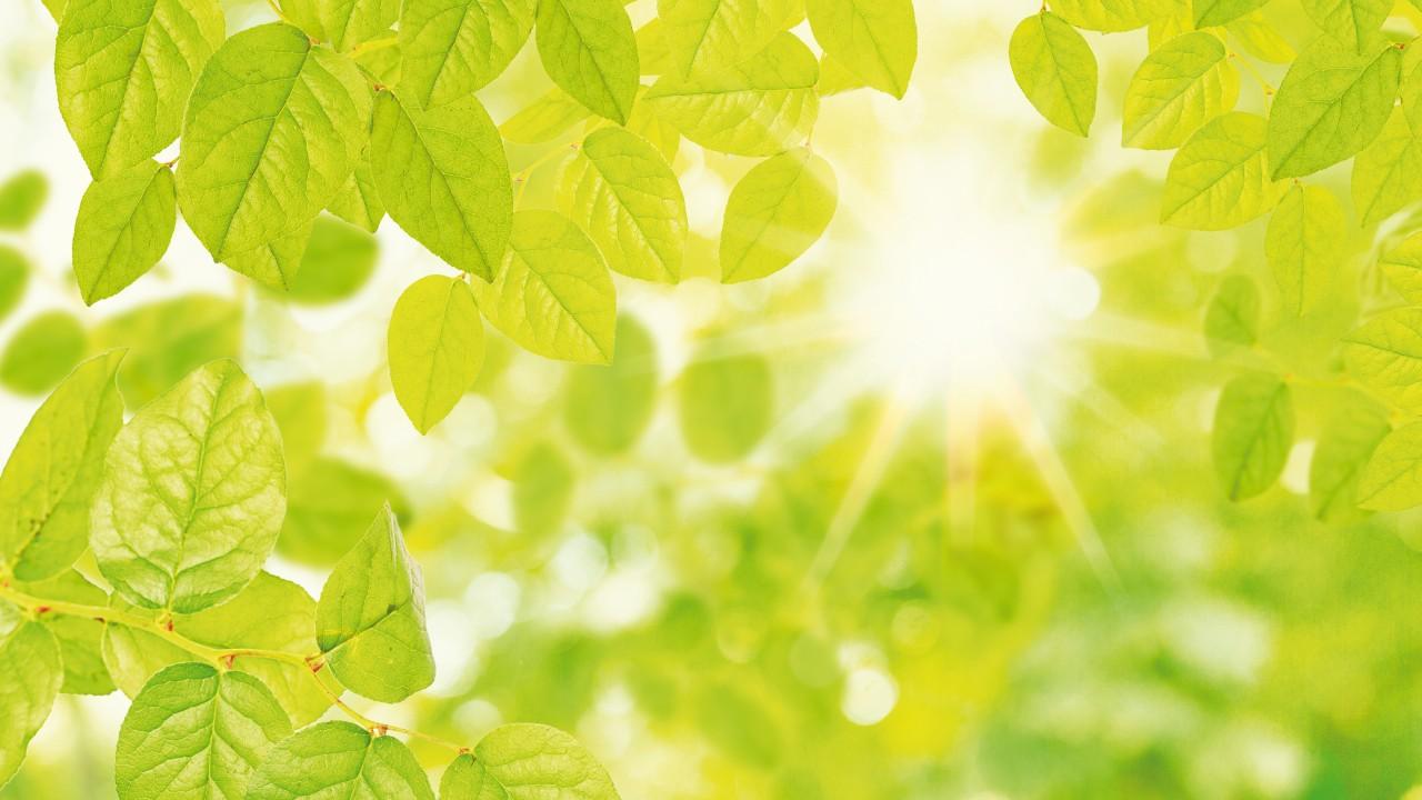 Regionaler Ökostrom für Potsdam: Sonnenlicht strahlt durch die grünen Blätter eines Baumes, © drubig-photo /Fotolia