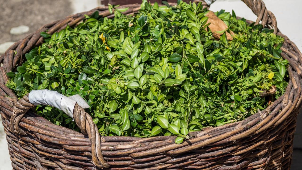 Großer Weidenkorb voller Grünschnitt, © animaflora /Fotolia
