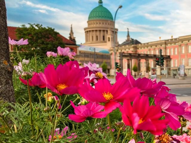 Bunte Blumen am Neuen Lustgarten mit dem Stadtschloss und der Nikolaikirche im Hintergrund, © Nils Schulz